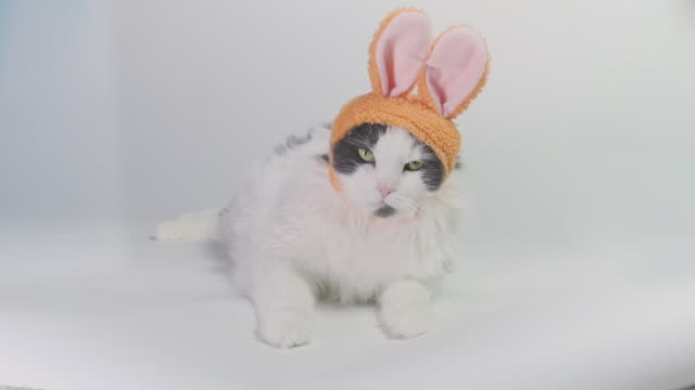 cat in bunny ears yawning - pet clothing stock videos & royalty-free footage