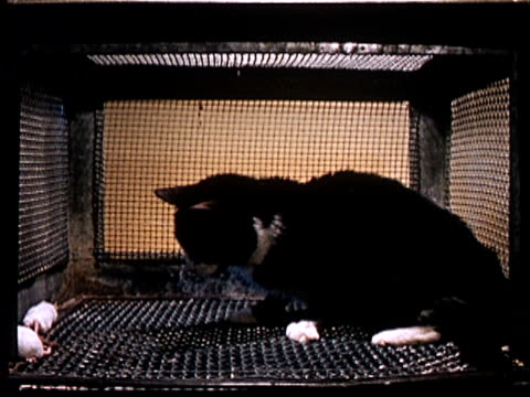 1960 MS Cat in cage afraid of mouse during drug experiment/ AUDIO