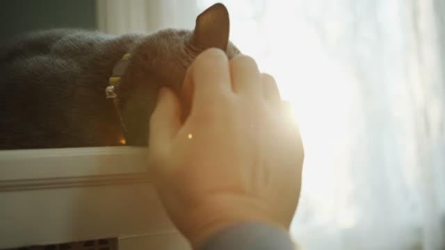 cat in enjoying sunlight fur pov human hand petting - stroking stock videos & royalty-free footage