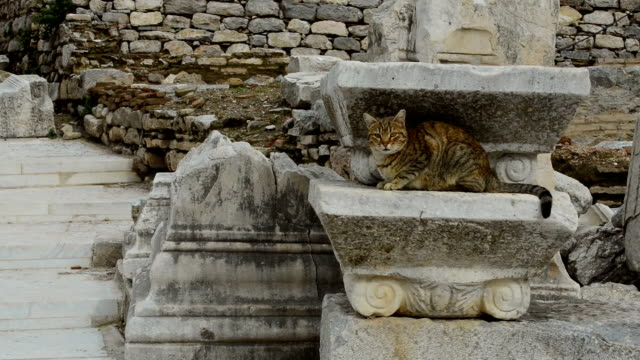 cat in ephesus - marble rock stock videos and b-roll footage