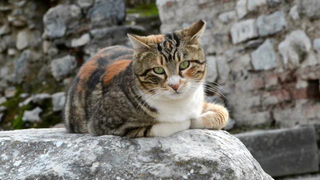 Katze in Ephesos