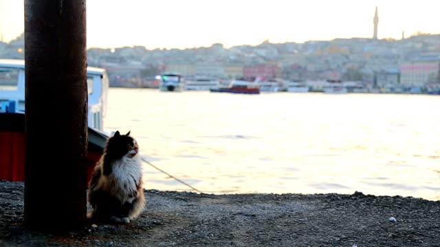 Katze in Karaköy port