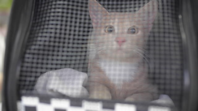 cat in pet carrier at veterinarian - carrying stock videos & royalty-free footage
