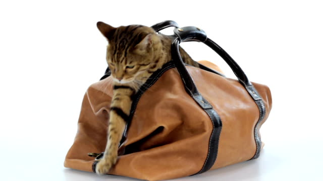 cat in the bag - bag stock videos & royalty-free footage