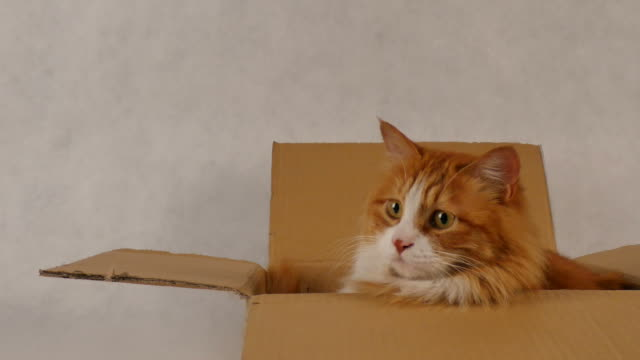 cat in the carton - package stock videos and b-roll footage