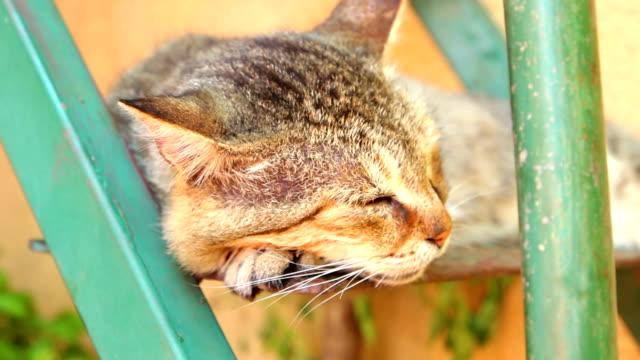katze schläft - tierisches haar stock-videos und b-roll-filmmaterial