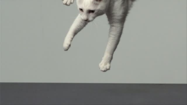 CU SLO MO Cat jumping on his feet/ San Francisco, California, USA