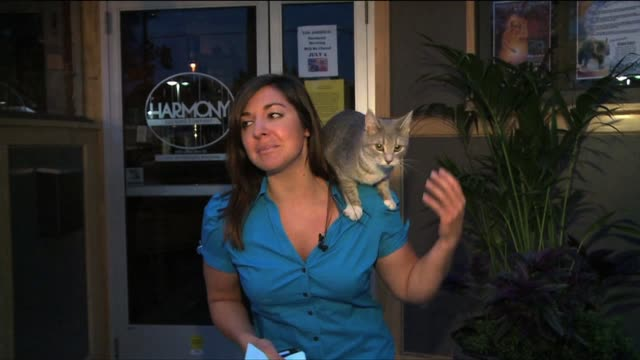 cat jumps on fox 17 reporter during live report - ngクリップ点の映像素材/bロール