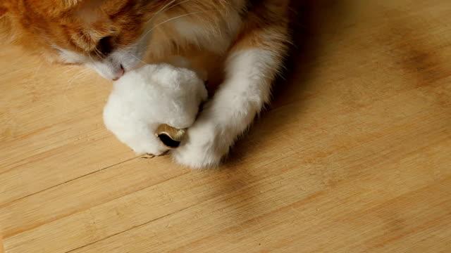 Cat Kiss The Cotton