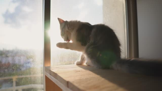 Katze Kätzchen Pflege eines Beins mit Sonnenlicht