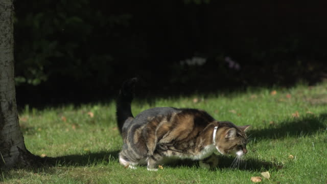 Cat landing on grass from tree