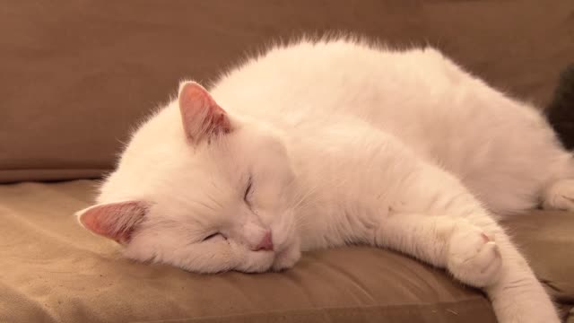 cat lazing on couch - pets stock videos & royalty-free footage