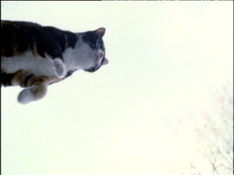 Cat leaps through air and over camera