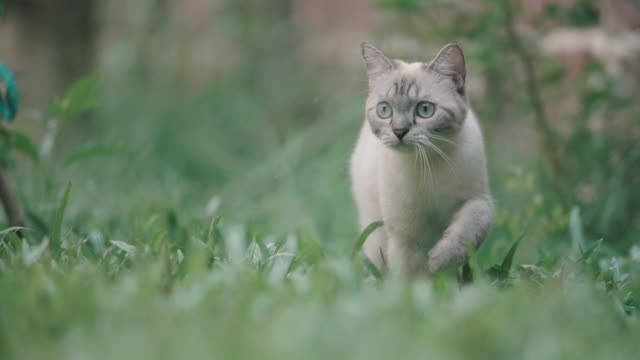 cat looking around and walking away - grass stock videos & royalty-free footage