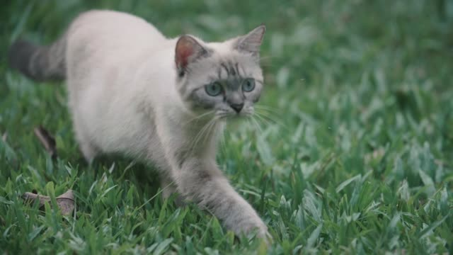 cat looking around and walking away - domestic cat stock videos & royalty-free footage
