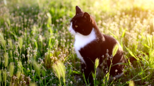 cat looking around and walking away - cute stock videos & royalty-free footage