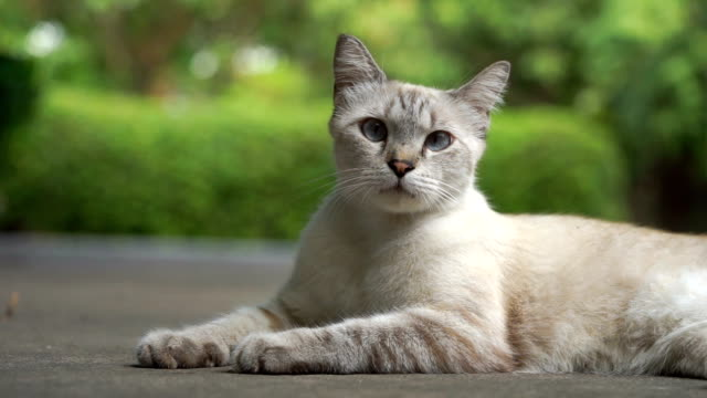 cat looking at camera in lying down pose with green nature background - cat blinking stock videos & royalty-free footage