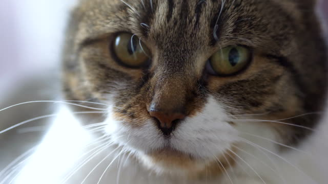 Cat looking at camera in slow motion in 4k