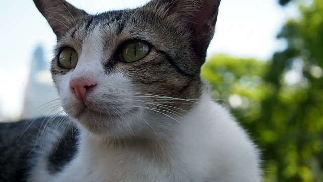 cat looking for something - grey stock videos & royalty-free footage