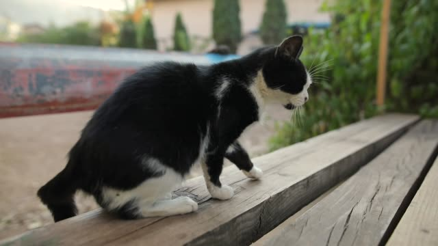 Cat looking into camera and stretching