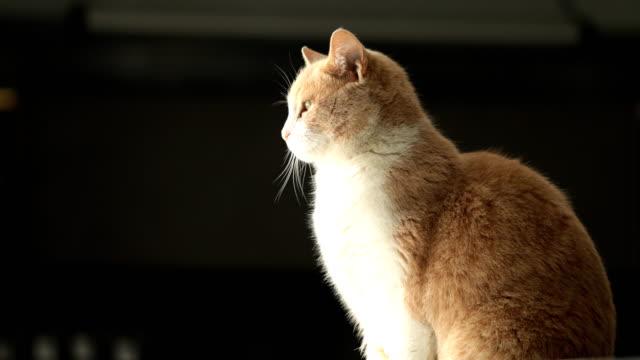 Cat 窓の外
