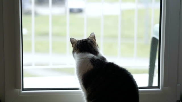 Cat looking through the window in slow motion in 4k