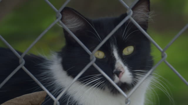Cat looking trough a fence