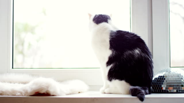 cat looks out window - ledge stock videos & royalty-free footage
