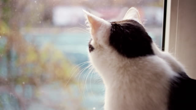 vídeos de stock e filmes b-roll de cat looks out window - peitoril de janela