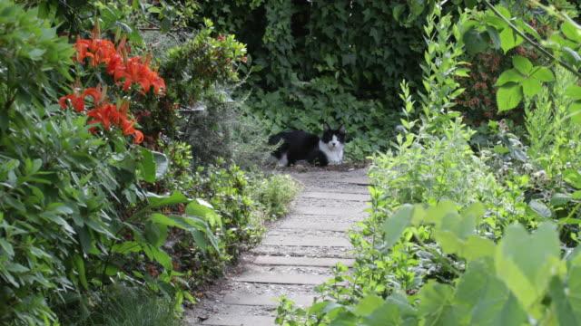 Cat lying along garden path
