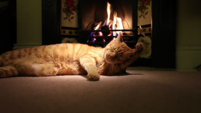 Cat lying (Felis catus) in front of fire, licking paws, UK