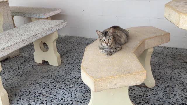 椅子に横になっている猫 - ショートヘア種の猫点の映像素材/bロール