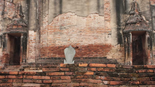 Cat on a brick wall.