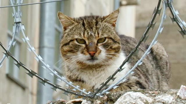 Katze auf einem Zaun mit Stacheldraht