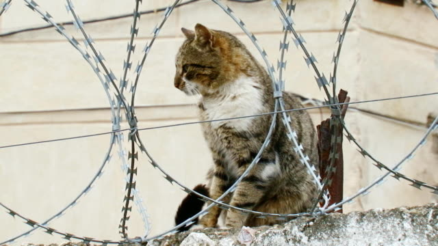 Cat on a fence with barbed wire