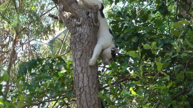 猫のツリー  - 迷子の動物点の映像素材/bロール