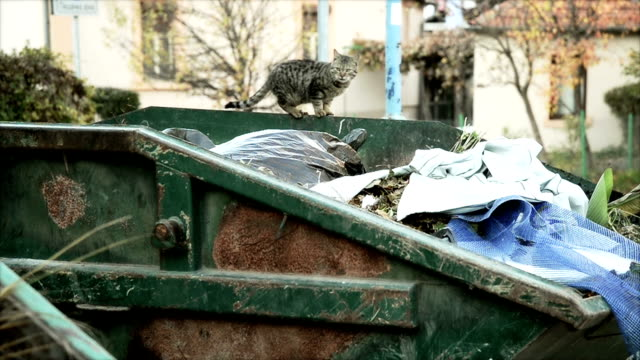 cat on garbage - ugliness stock videos & royalty-free footage