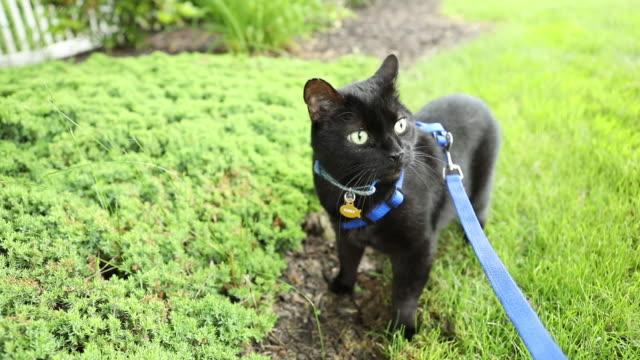 屋外でのリーシュを楽しむ猫 - 鎖点の映像素材/bロール