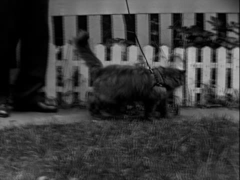 cat on leash - picket fence stock videos & royalty-free footage