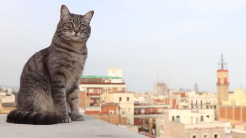 vídeos y material grabado en eventos de stock de cat on rooftops in barcelona - tejado