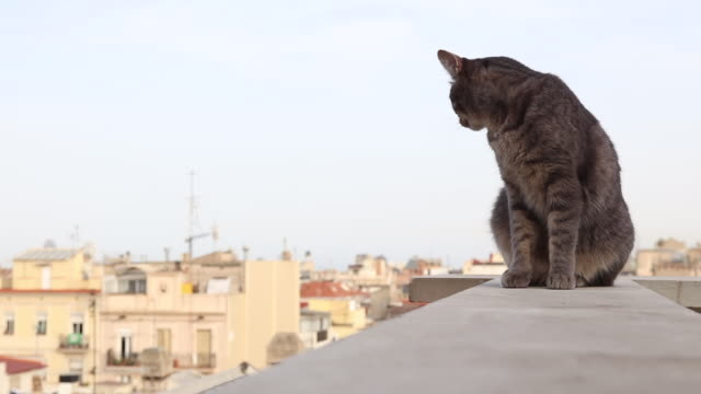 stockvideo's en b-roll-footage met cat on rooftops in barcelona - dak