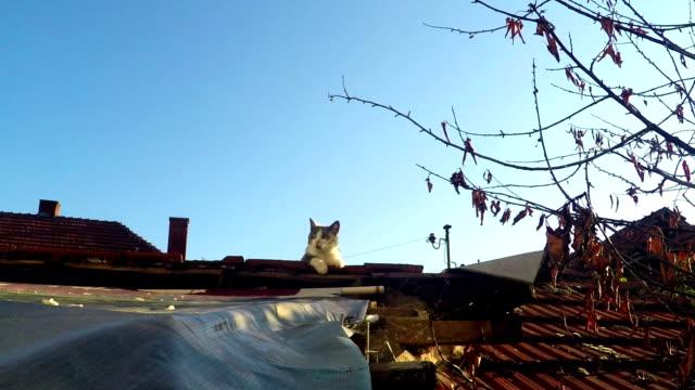 猫の屋上 - 座る点の映像素材/bロール