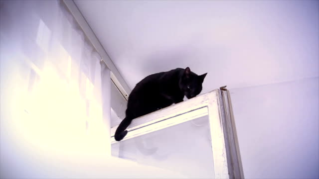 cat on the top of the window in a apartment - curiosity stock videos & royalty-free footage