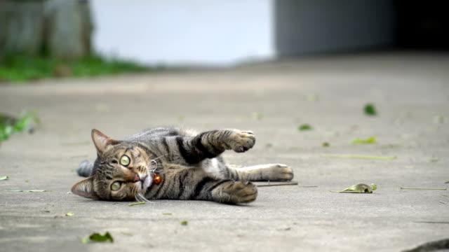 SLOMO Katze spielen, hinlegen und Gesicht Kamera
