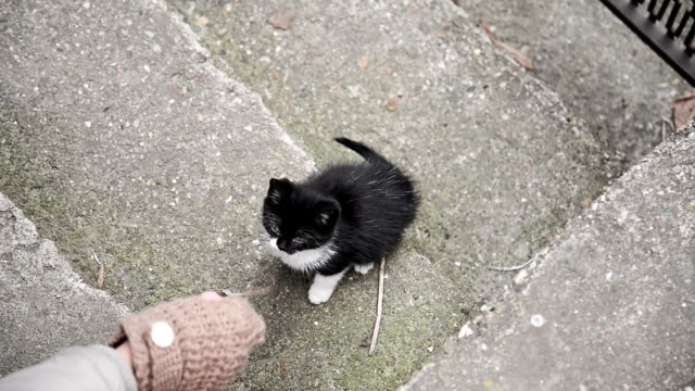 cat playing - black hairy women stock videos & royalty-free footage