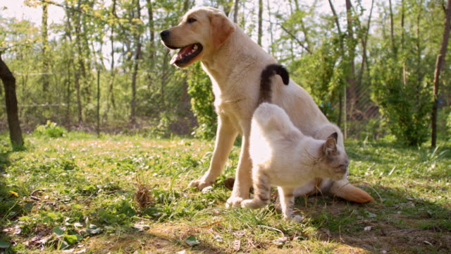 cat playing with a young dog - dog and cat stock videos and b-roll footage