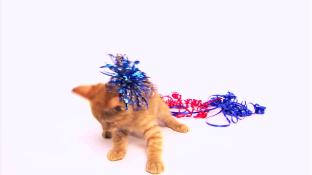 Cat playing with ribbons