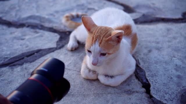 猫がカメラの前でポーズ - photographing点の映像素材/bロール