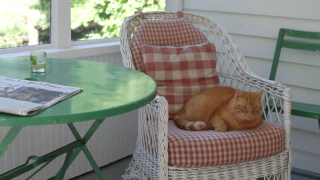 a cat relaxes on a porch chair cushion. - cushion stock videos and b-roll footage
