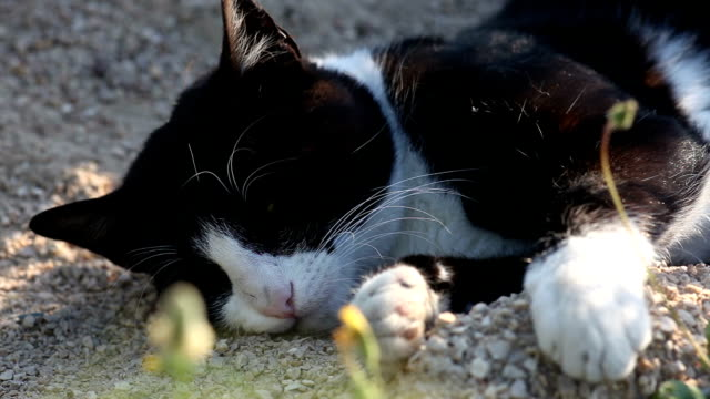 cat relaxing - lying on side stock videos & royalty-free footage